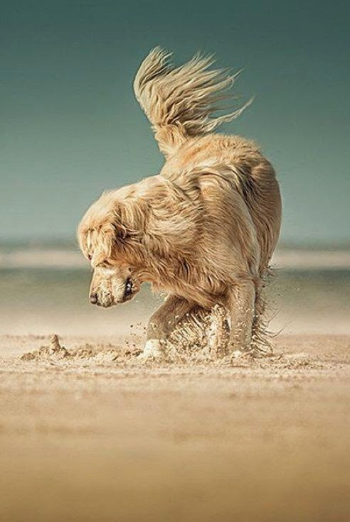 See more Golden Puppy love this picture. http://cutepuppyanddog.blogspot.com/