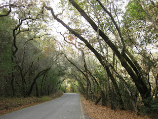 Trees arching from both sides over Redwood Retreat Road, Gilroy, California