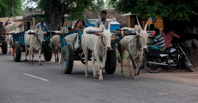 char bœuf tamil