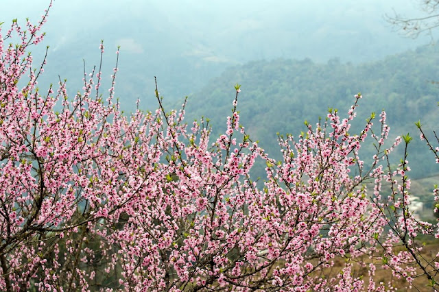 Top 5 tourist destinations in northern Vietnam most attractive in the Spring