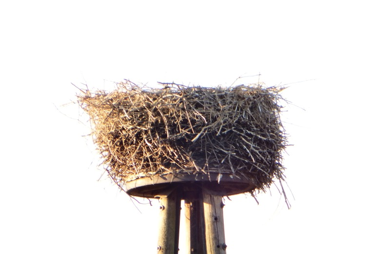 st rche in dorsten 10 7 leeres nest syndrom. Black Bedroom Furniture Sets. Home Design Ideas