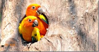 Burung Betet : Burung Betet Yang Memiliki Banyak Suku - Burung Kicau - Birds Chirping