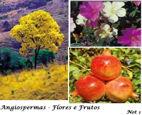 Angiospermas | Características das Plantas Angiospermas