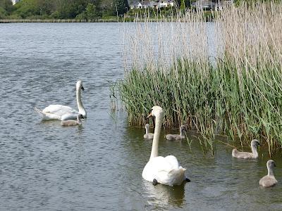 Swanpool, Falmouth