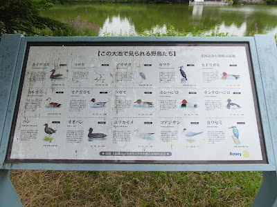 花博記念公園鶴見緑地 大池で見られる野鳥たち