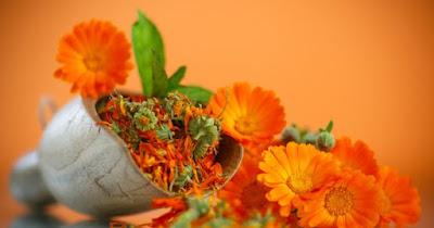 http://tipspetani.blogspot.com/2017/11/manfaat-minyak-bunga-calendula-untuk.html