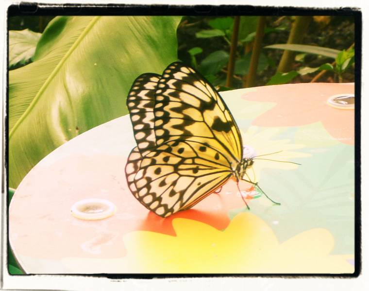 Butterfly Paradise At London Zoo: What Great Captures!?