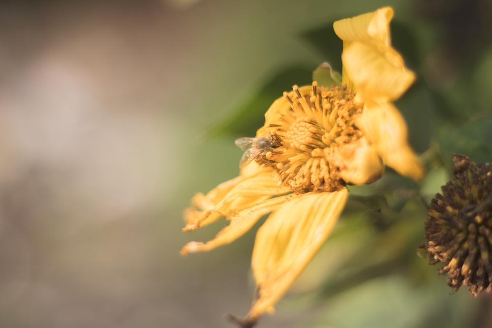 Como fotografar usando câmera DSLR - semi-profissional