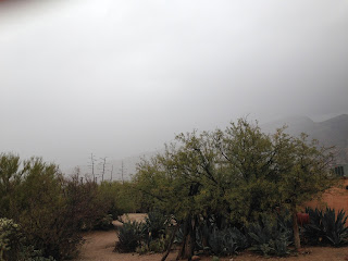 Mesquite tree in foreground with sandy desert path leading into other mesquite trees and agaves blooming. In the background thick clouds cover and obscure mountains.
