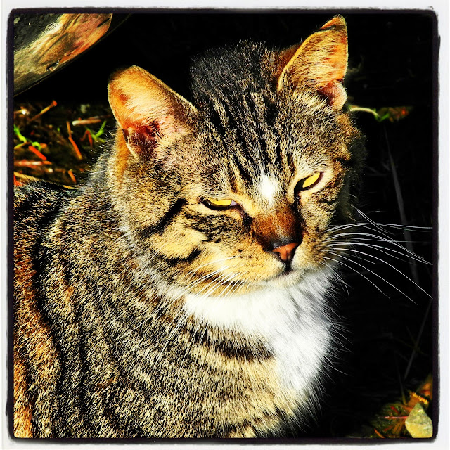 Star Cat the tabby with the forehead star, Instagram photo