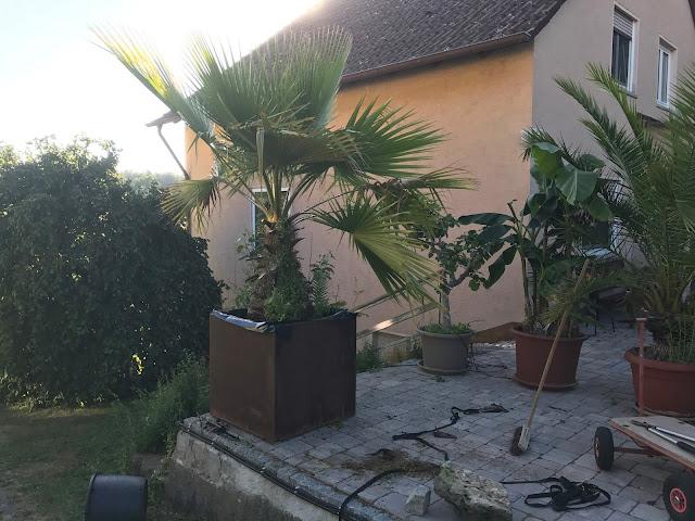 die Sonne geht langsam unter und die Palme ist endlich im neuen Topf (c) by Jochim Wenk