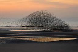 Beberapa Formasi Burung Terbang yang Sungguh Indah dan Keren!