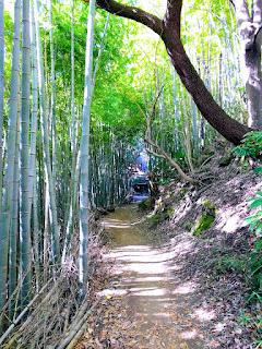 風情ある竹林の奥に茶屋が見える