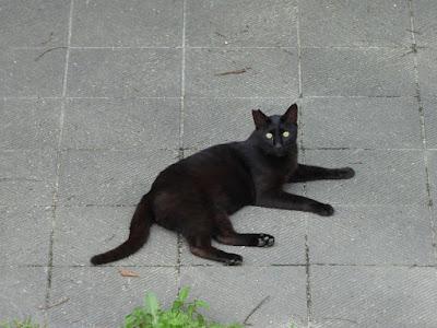 深北緑地で見かけた黒猫