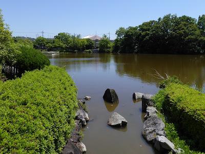枚方市・市民の森(鏡伝池緑地)の亀