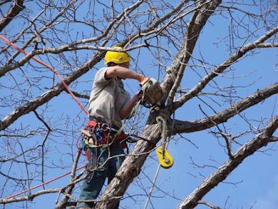abbattimento-alberi-normativa