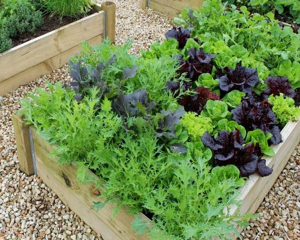cajones de cultivo guia de jardin