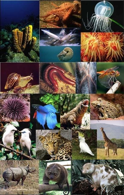 Ilmu Yang Mempelajari Tentang Hewan : mempelajari, tentang, hewan, FATHONI:, ZOOLOGY, Mempelajari, Tentang, Hewan