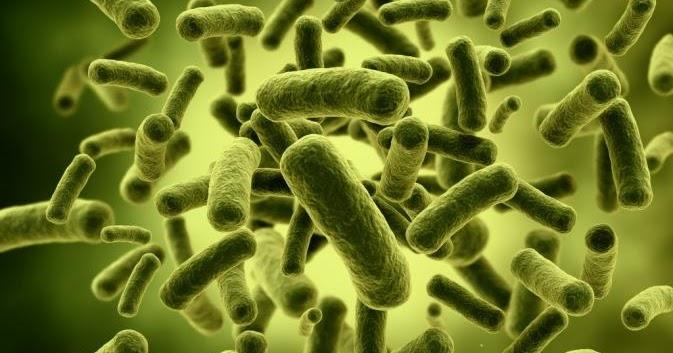 3 Jenis Probiotik Paling Bagus Untuk Pencernaan Yang Harus