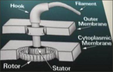 РАСКРЫВАЯ ТАЙНУ ЖИЗНИ - Сложный механизм жгутиковой бактерии