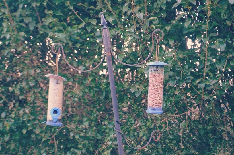 bird feeders seed nuts hakin pembrokeshire wales