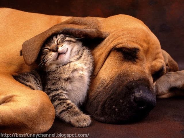 Funny cat and dog sleeping.