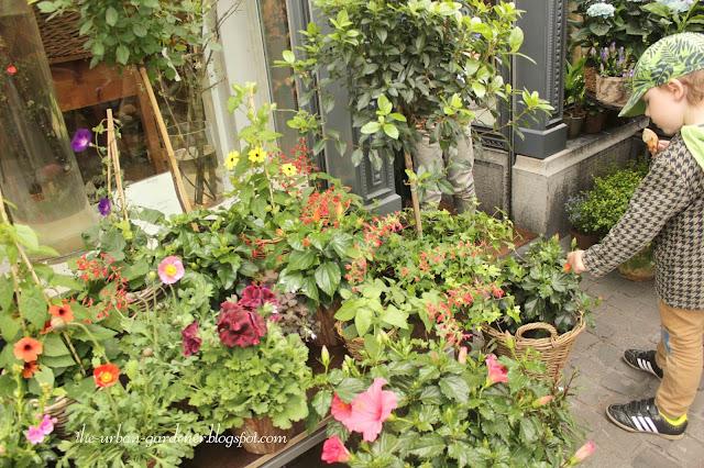 Beautiful display of flowering plants for indoor or outdoor spaces