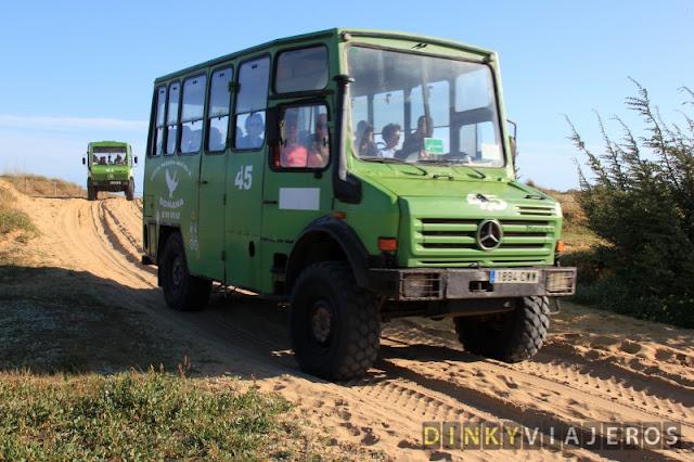 Excursión organizada en las dunas de Doñana
