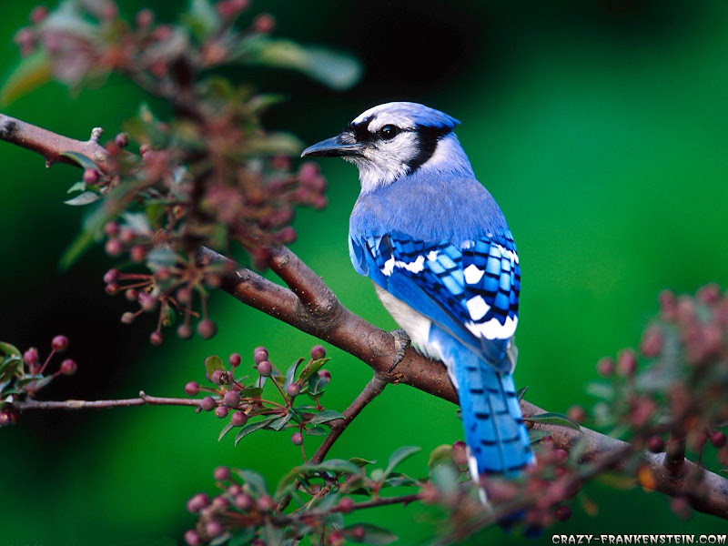 Beautiful Birds Wallpapers title=