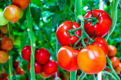 Trị nám da tại nhà hiệu quả bằng cà chua