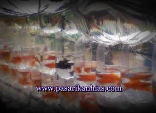 Pasar Ikan Hias Termurah Di Kelapa Gading