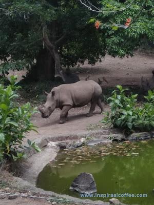 Badak Taman Safari Prigen