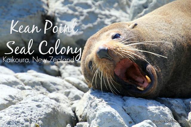 Kean Point Kaikoura Seal Colony