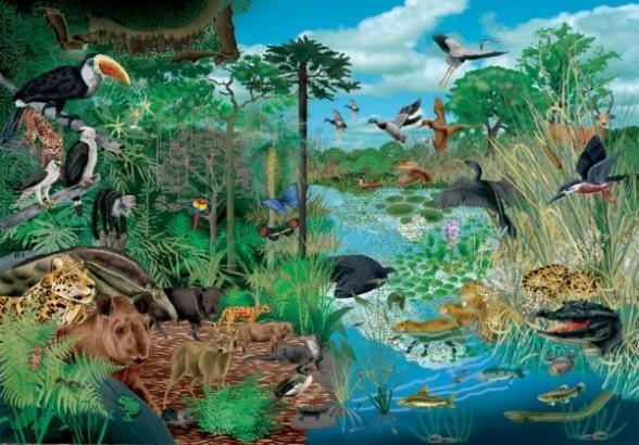 biodiversidad para niños y niñas