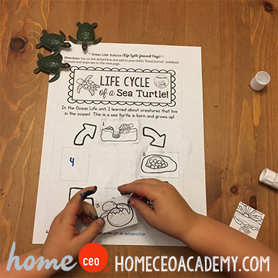 https://www.teacherspayteachers.com/Product/Ocean-Life-Week-13-Age-4-Preschool-Homeschool-Curriculum-by-Home-CEO-2475608