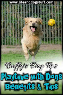 Playtime With Your Dog Benefits and Tips