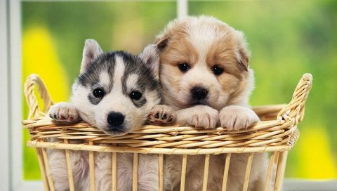 Funny Pictures Gallery Cute Dogs And Cats Wallpapers Cute Puppies