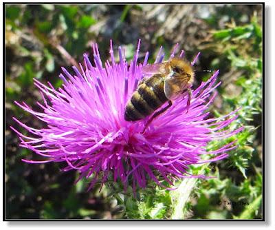 Insekten im November