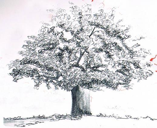 atelier de l 39 oasis dessiner un arbre. Black Bedroom Furniture Sets. Home Design Ideas