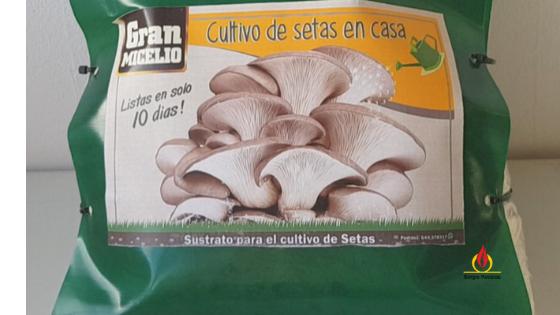 Kit de cultivo de setas ostra. Pruebo este producto y elaboro algunas recetas con él