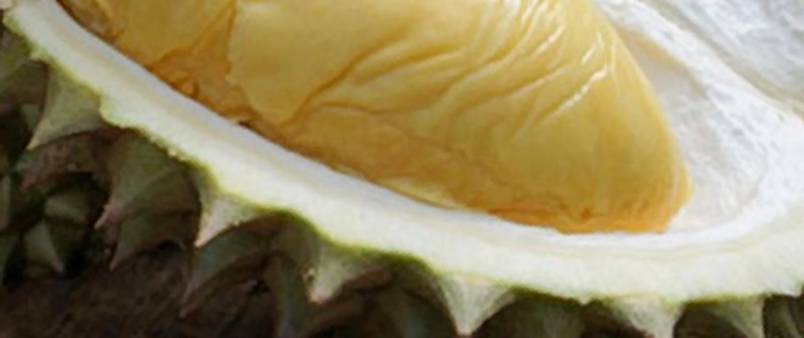 14 Manfaat Buah Durian untuk Kesehatan