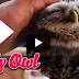 Η κουκουβάγια της στοργής!  (Βίντεο)