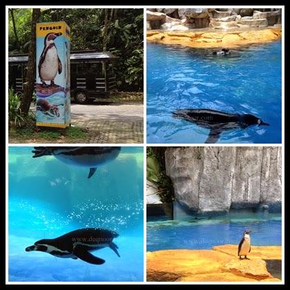 Dolphin Show Taman Safari Indonesia 1