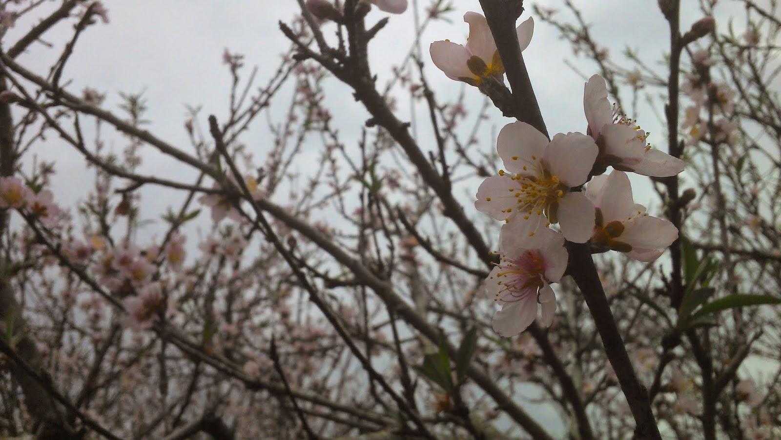 Flor de pessegueiro em um galho em primeiro plano ilustra este post sobre o Shijing, o Livro das Canções.
