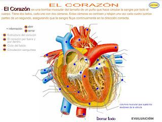 http://www.eltanquematematico.es/corazon/corazon.swf