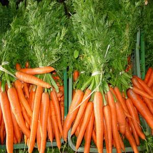 manfaat jus wortel, sehat alami. life insurance
