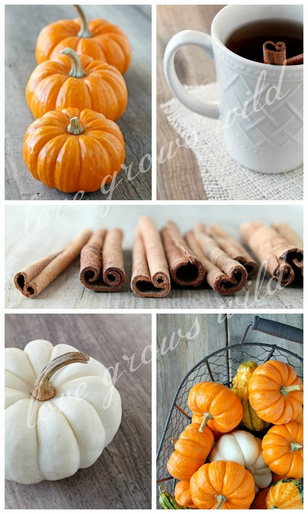 Fall Photography at Love Grows Wild - The Shop!