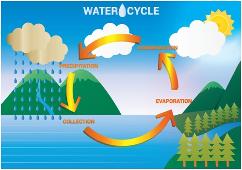 Birla world school oman homework for 3 b on 06022017 draw the water cycle in an a4 sheet heading the water cycle and submit the same on 722017 hindi ccuart Image collections
