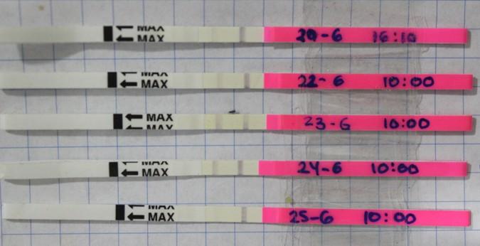 test de ovulacion positivo o negativo
