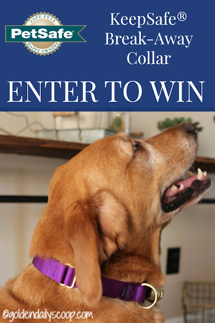 PetSafe KeepSafe break-away collar giveaway